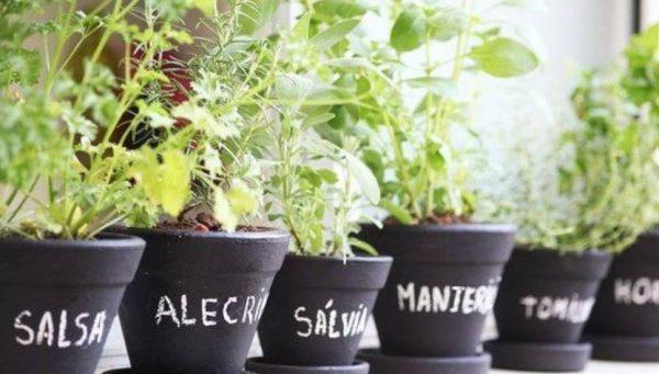 Horta medicinal: como ter uma e quais plantas cultivar