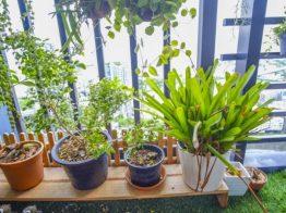Que tal montar uma horta para apartamento e dar mais sabor à sua vida?